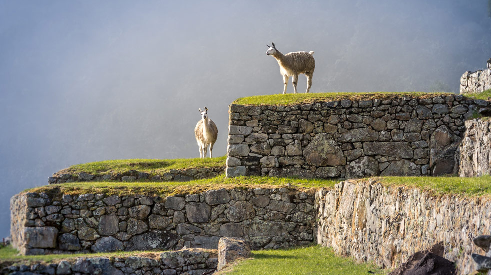 To NEJ z Peru