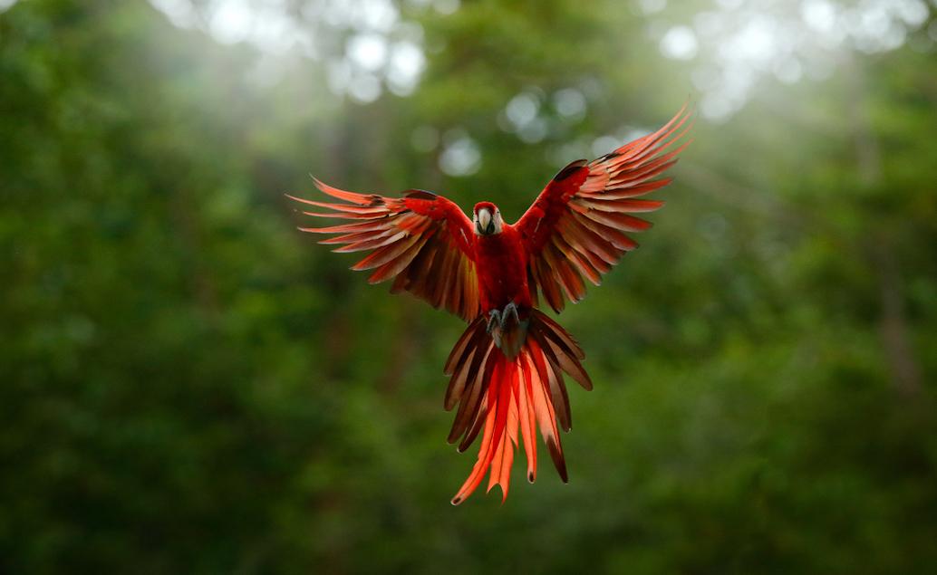 Rovníková oáza Ekvádor a šamanská Amazonie
